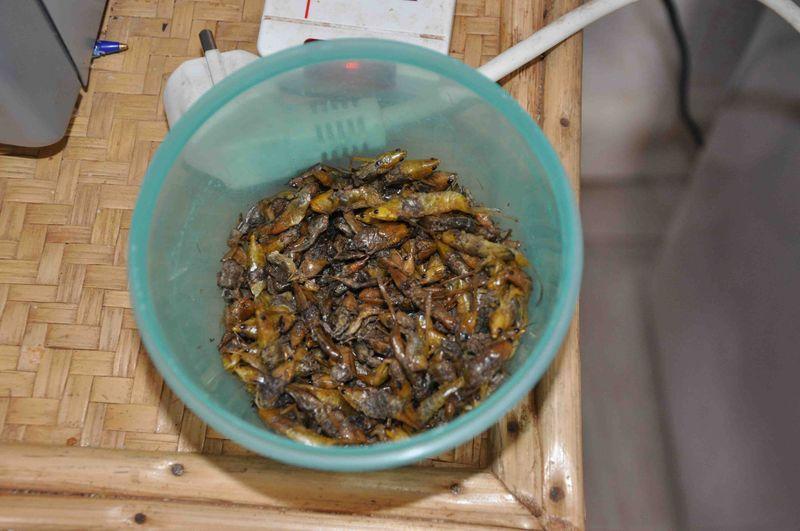 Grasshopper snack